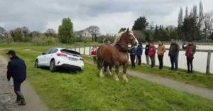 Koľko koní má tento kôň? Vyťahovanie auta z priekopy si dal na raňajky