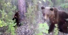Medveďa na seba z nepochopiteľného dôvodu zámerne upozornil a nepekne na to doplatil