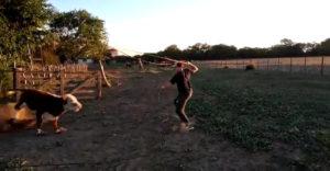 Nádejný kovboj zlyhal pri tréningu. Schytal hlavičku od býka