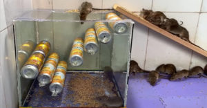 Dobre premyslená pasca na myši (Domáca výroba)