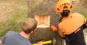 Robota profesionálov! Pílenie stromu si vopred perfektne naplánovali
