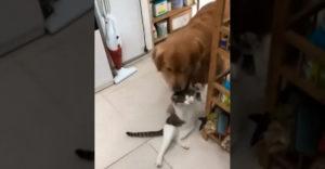 Keď nejde mačka k majiteľovi, tak ide pes k mačke