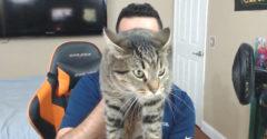 Chcel sa pochváliť svojou dobrou mačičkou. Dostala záchvat a vyškriabala ho
