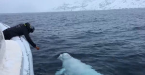 Aha, sleduj ma! Naučil som veľrybu aportovať