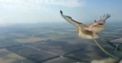 Kamera v kokpite Boeingu 737 zachytila zrážku lietadla s vtákom
