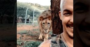 Sadol si za strom a nechal leva pristúpiť od chrbta