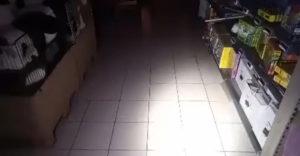 Práca nočného strážnika v hračkárstve môže byť pekné psycho