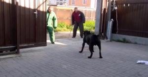 Strážny pes s výcvikom na najvyššej možnej úrovni