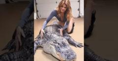 Nič neobvyklé, len masáž pre aligátora