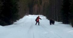 Zaútočil na neho medveď. Nebojácny Švéd ho odohnal krikom