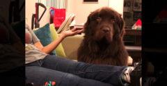 Prečo si urazený? Pes dal majiteľke okúsiť jej vlastné praktiky