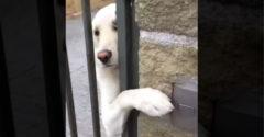 Pri odchode do práce mal ťažkú úlohu. Nechať šteniatko doma bez toho, aby sa cítil smutný