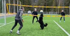 Keď sa pes naučí hrať volejbal lepšie ako ty