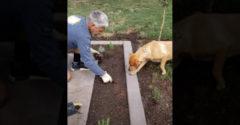 Keď do roboty na záhrade zapojíš aj psa (Ideálny pracovník)