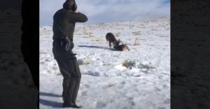 Jediný výstrel zachránil dva jelene