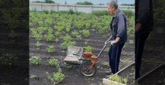 Šikovný vynález na odstránenie škodcov z nadzemnej časti zemiakov