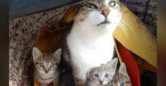 Žena vzala svoju mačku k veterinárovi, pretože každý mesiac kotila mačiatka. Ten ju vyviedol z omylu