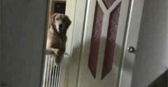 Pes každú noc sledoval majiteľov, až kým nezaspali. Keď zistili dôvod, zlomilo im to srdce