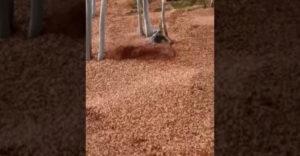 Keď to jeseň preháňa (Biker v lese)