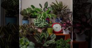 Ako sa pohybujú rastliny v domácnosti počas 24 hodín