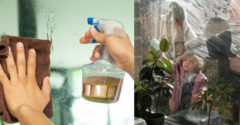 Obľúbený nápoj alebo efektívny čistiaci prostriedok na okná? Pre mnohých oboje