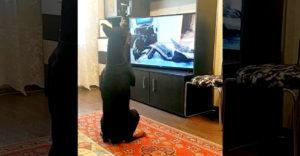 Čo robia doma psy počas karantény majiteľa? (E-tréning)