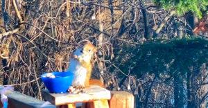 Veverička sa sťala na mol. Pojedla kvasené hrušky
