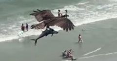 Orol si ponad plážou zalietal so žralokom v zobáku
