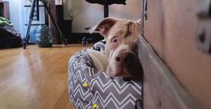 Zachránili psa z ulice so zraneným okom. Dnes je z neho šťastný hafan
