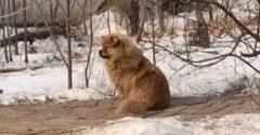 Pes čaká na svojho pána aj 5 rokov po jeho smrti (Hačikó story)