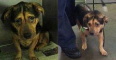 Chceli si adoptovať najsmutnejšieho psa z útulku, no personál ich odhováral. Oni sa však nedali a dnes je všetko inak