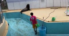 Čo robia tulene, keď pracovníci ZOO čistia bazén? Užívajú si to