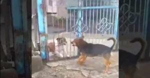 Keď sa strážny pes vráti z prestávky