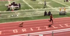 Divákov nadchol psík, ktorý sa rozhodol zapojiť do bežeckej súťaže. Šprint napokon vyhral