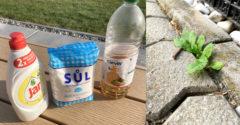 Ako sa podomácky zbaviť buriny? Stačí zmiešať 3 ingrediencie, ktoré isto nájdete doma a nastriekať na nežiaduci porast