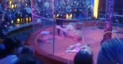 Levica zaútočila na svojho trénera v cirkuse (Rusko)