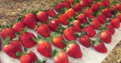Jednoduchý trik, ako udržať jahody čo najdlhšie čerstvé