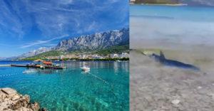 Na jednej z chorvátskych pláží pred pár dňami nastala panika. V plytčine sa objavil dvojmetrový žralok