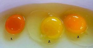 Ktoré vajíčko je najzdravšie? Farba žĺtka vám o tom napovie